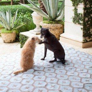 ON SALE:  Elizabeth Indoor Outdoor Rug by Dash and Albert