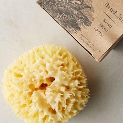 Small Sea Wool Sponge